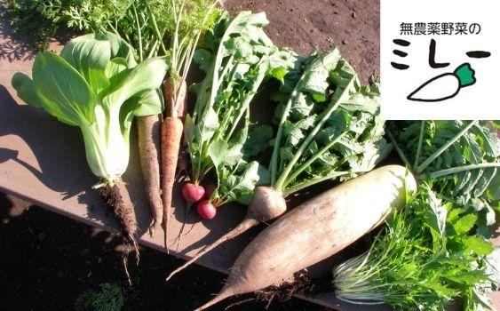 無農薬野菜のレミー